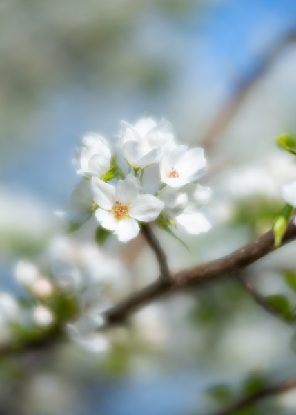 Arboretum_2018May6_2-0252.jpg