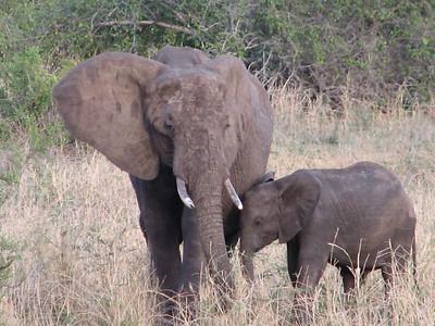 Tanzania, Tarangire National Park, 2006