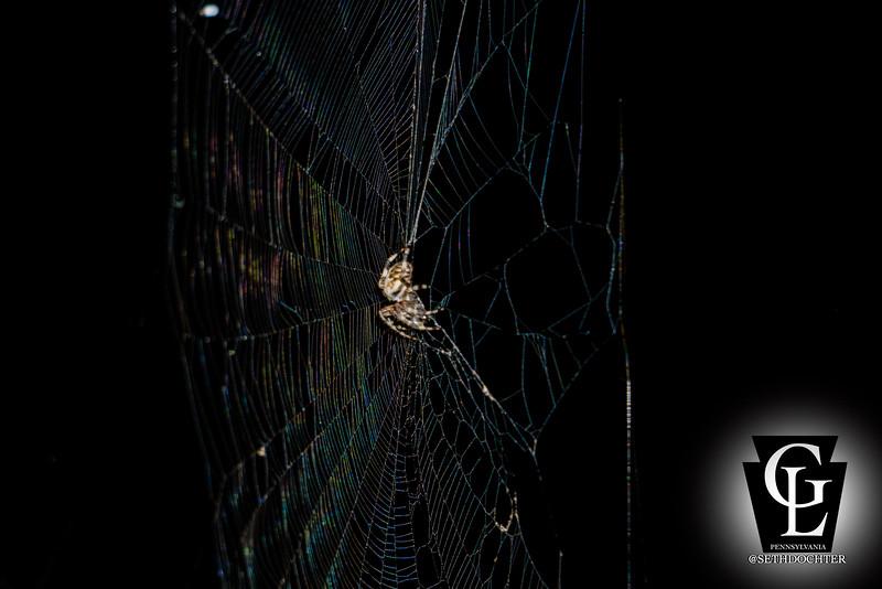 spider - dark background rainbow silk (p).jpg