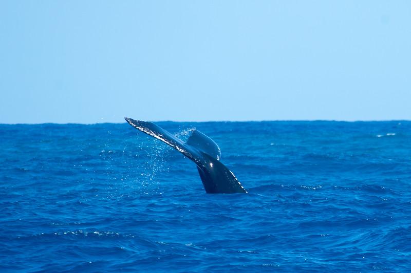 whales-leila-44.jpg