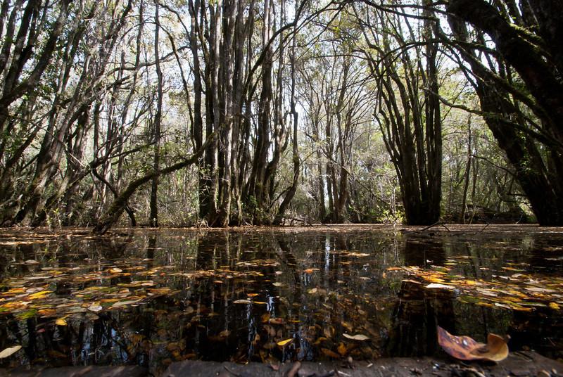 El Bolson 201111 Lago Puelo (53).jpg