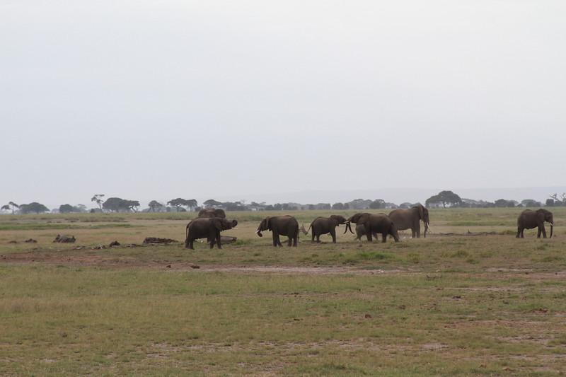 Kenya 2019 #2 331.JPG