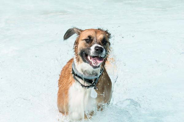 2017-09 dogs invade orange ave