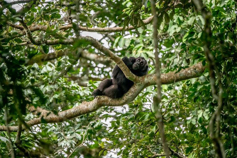Uganda_T_Chimps-1049.jpg