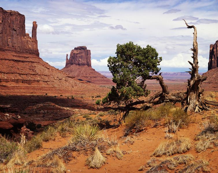 Juniper in Monument Valley.jpg
