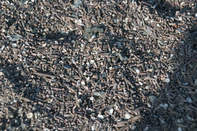 Gravel made from shells and sea urchins spines