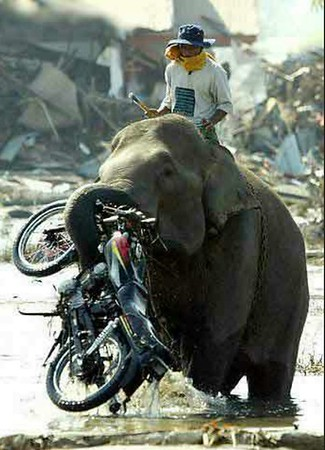 Strange, funny, weird, moto pictures
