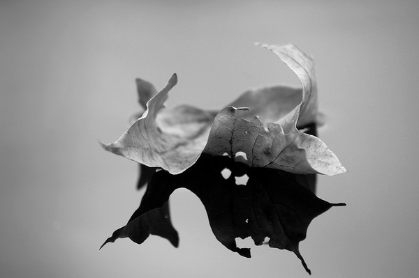 B&W Floating Leaves