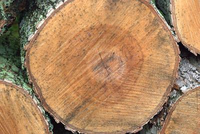 2010 05 27: Woodpile, Ephraim WI