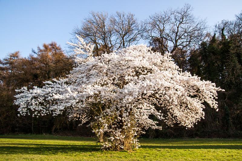 Blooming Blossom.jpg
