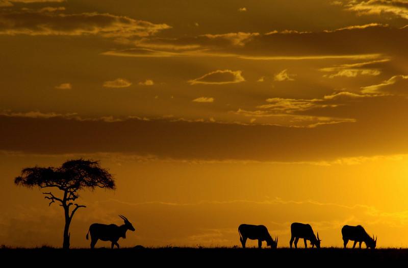Africa05-0601.jpg