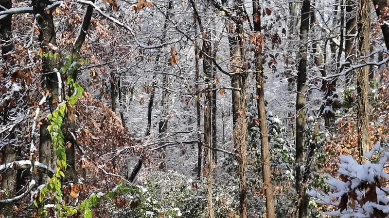 Snowy trees backyard loop2.mp4