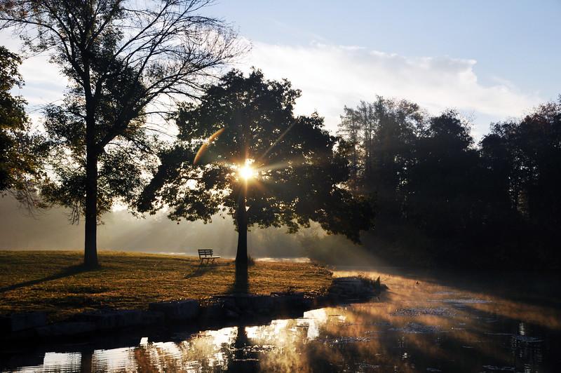 SUN & TREE JACKSON PARK .jpg
