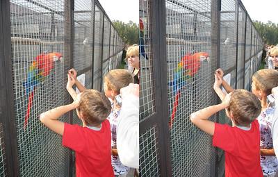 2008-09-07, Birds Park (3D Stereo, cross-eye view)