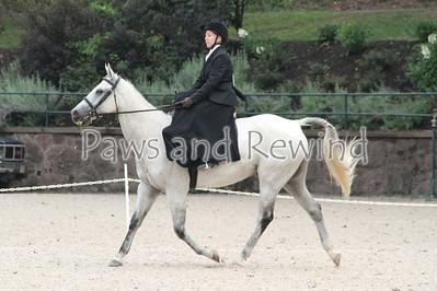 Walk Trot Equitation