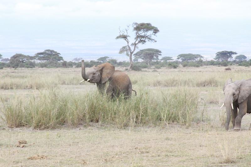Kenya 2019 #2 645.JPG