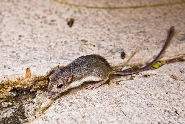 2009 Wildlife