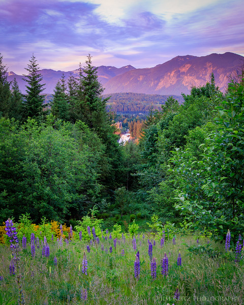 Mountain, Falls, and Lupine