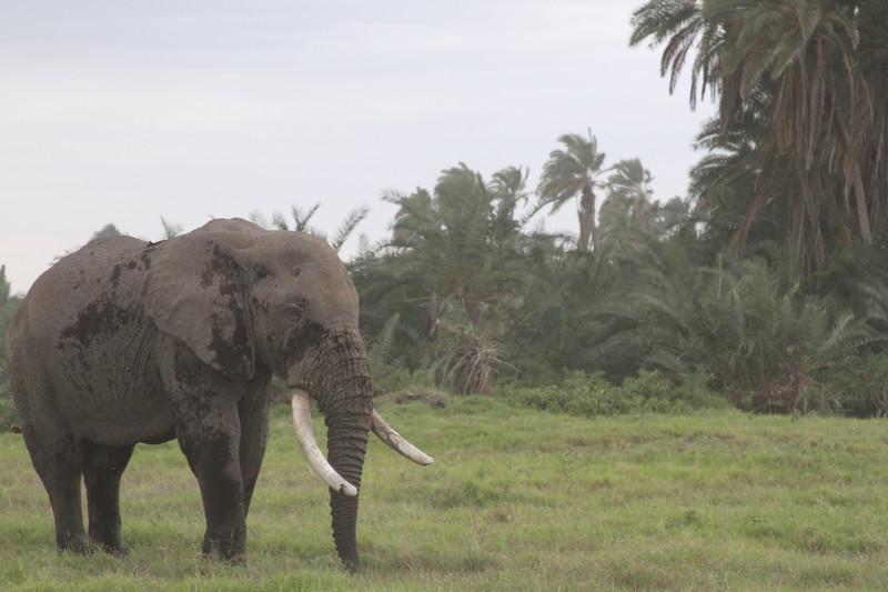 Kenya 2019 #2 1494.JPG