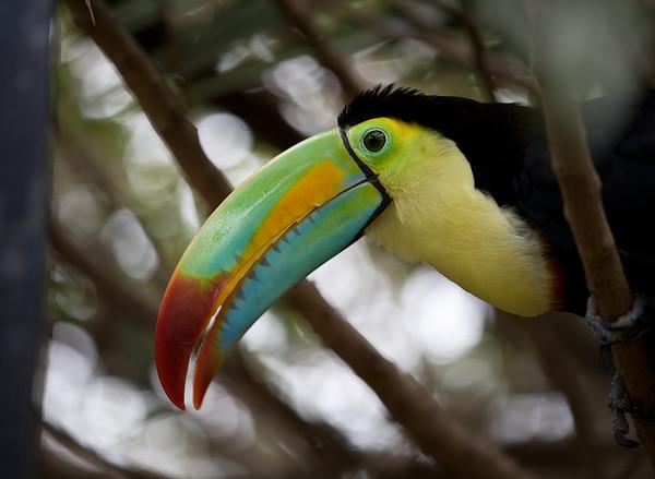 Tropical Park - Lanzarote