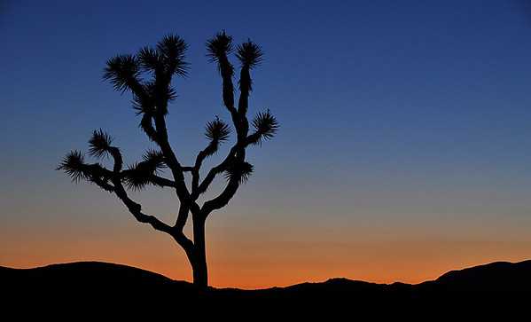 Joshua Tree National Park - Night Shots
