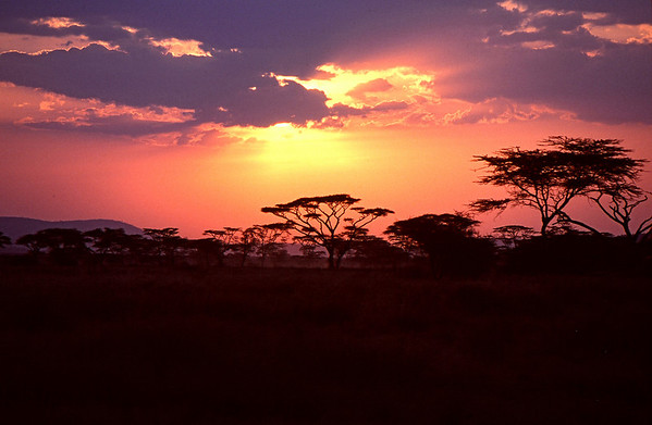 African Vistas