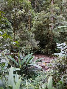 Liwagu trail