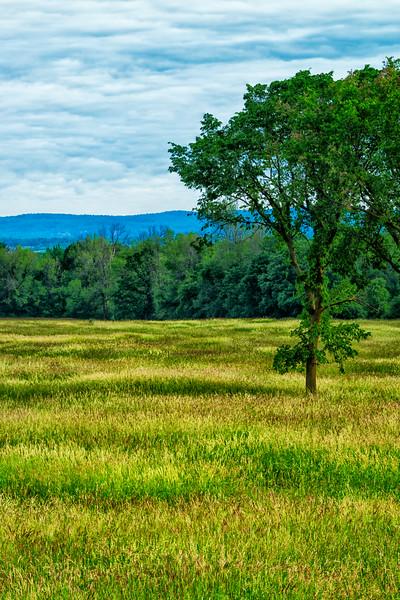 Grasses_June 21-2014_02.jpg