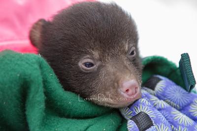 Black Bear DEC