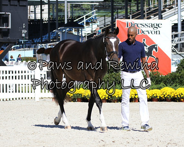 Tuesday Gold Ring:  Class 106 Two-year old Colts and Geldings (born 2011)