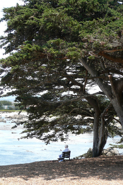 Contemplation in the Shade. Monterey