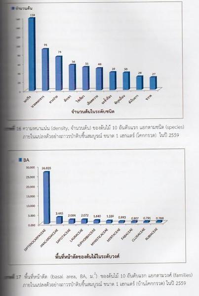 Phangan trees from Thai research 12.jpg