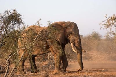 2017 Amboseli (Kenya)