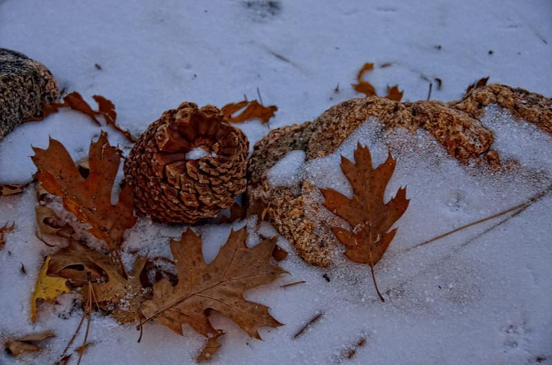 Natures winter art