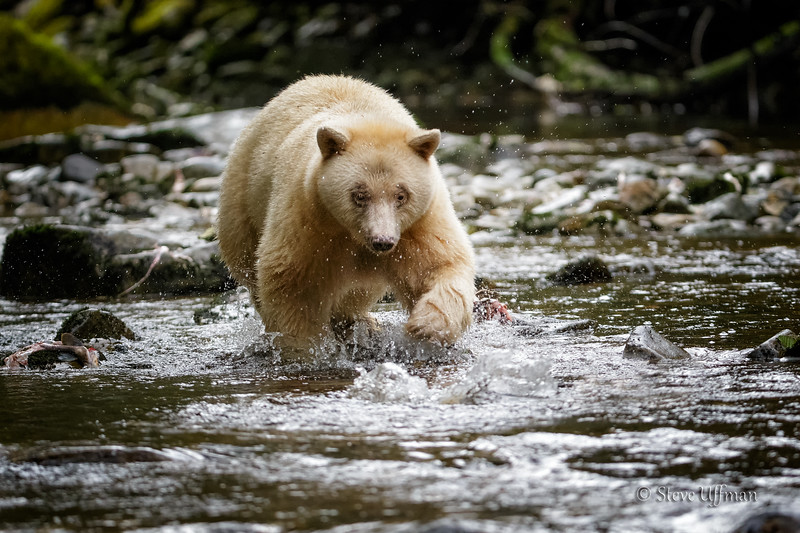 20150930-_G7Q7835Spirit-Bears-British-Columbia-Edit - Copy - Copy.jpg