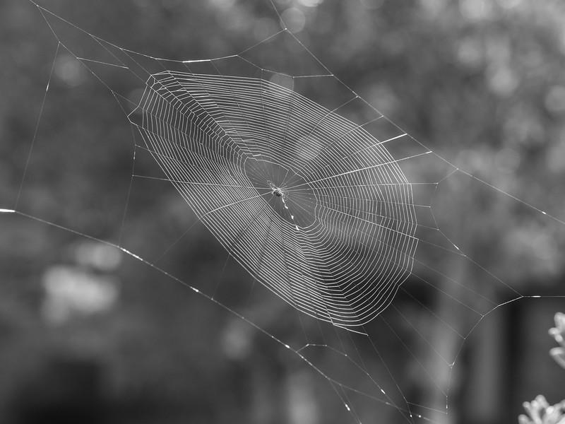 aus-oct-spider-10-23-2016-4-2-2.jpg