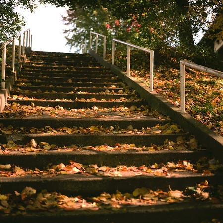 Kearsley Park Medium Format Film