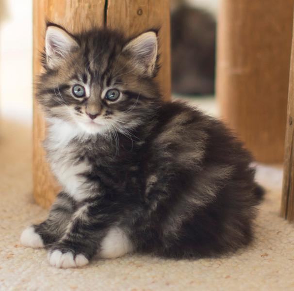 Kittens296.jpg