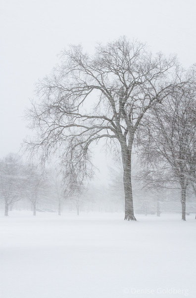 a tree standing in blowing snow