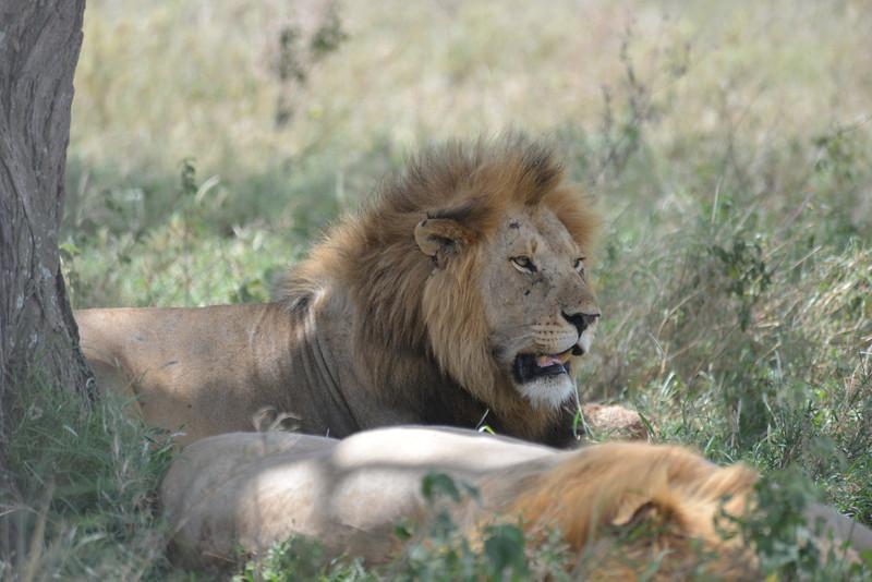 East Africa Safari 331.jpg