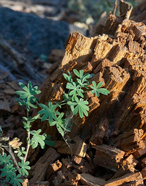 sequoia_natl_park-1.jpg