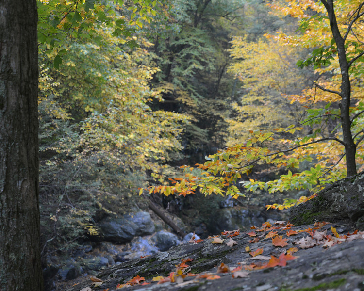 Copake leaves.jpg