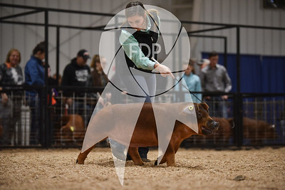 Duroc Ring Shots