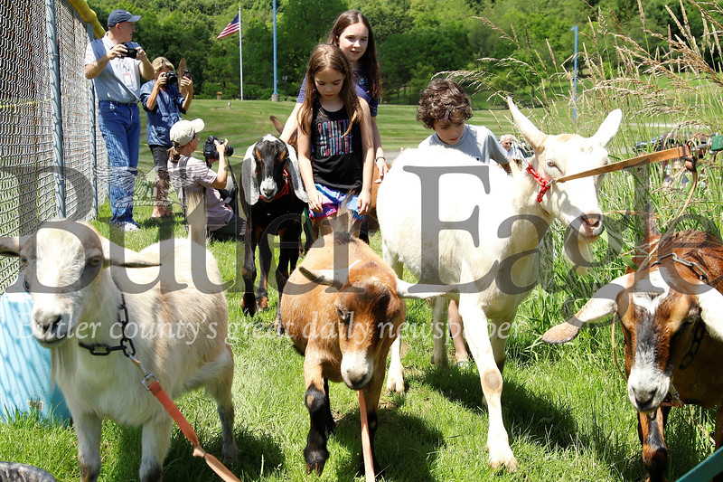 Kids and volunteers help herd goats from Allegheny GoatScape to their temporary pen in Cranberry's North Boundary Park. The herd will be on site for the next few weeks grazing on overgrown grass and weeds. Seb Foltz/Butler Eagle