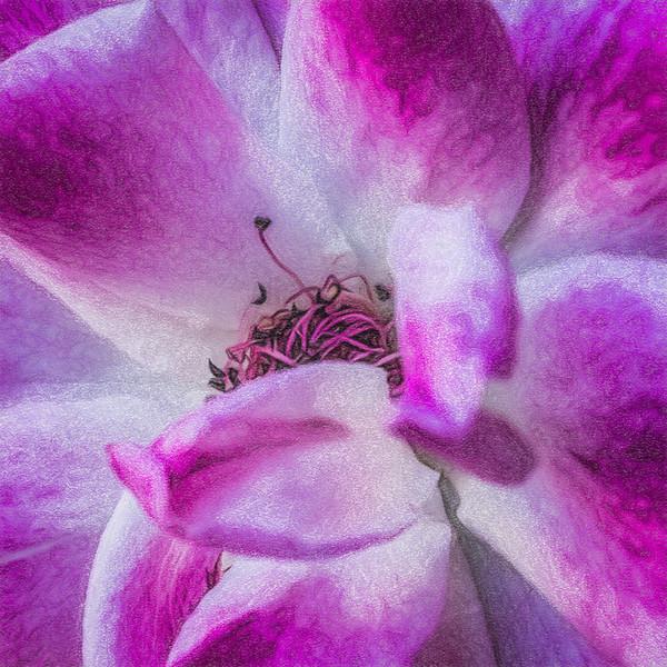 July 20 - Summer bloom.jpg