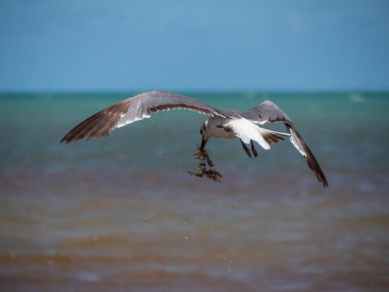 bahia honda gull