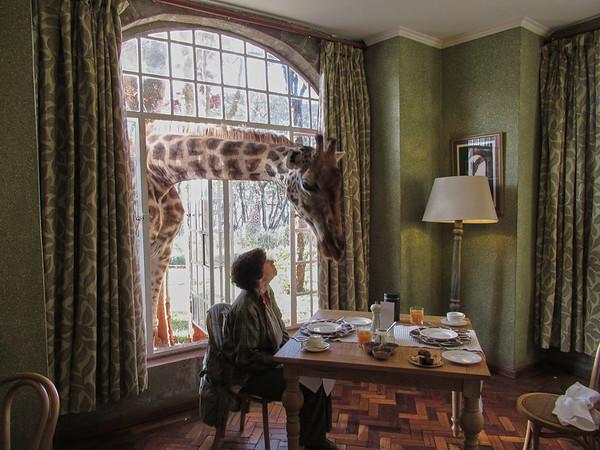 Giraffe Manor Nairobi Kenya 2018