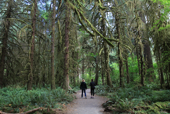 Quinault National Forest - 2016