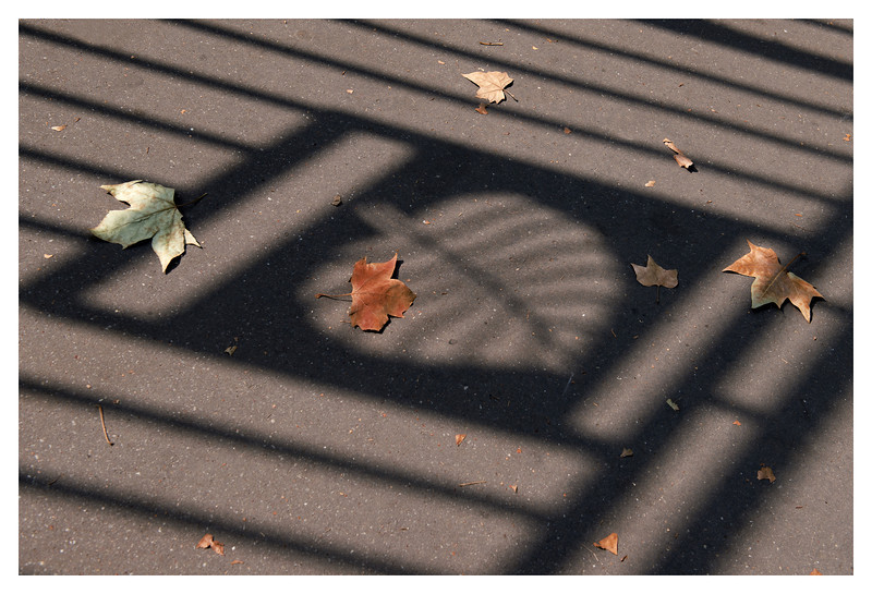 Dale thought I was nuts to take a picture of leaves in the shadow of of a fence with a leaf.