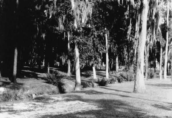 1928-Willowbranch Park - Sydney Street.jpg